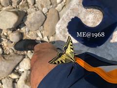 Professione Farfalla Ago&Filo (iw2ijz) Tags: sassi spiaggia persona costume lake lago lagodigarda butterfly farfalla