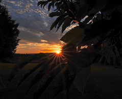 Spikes (Deepgreen2009) Tags: prickles star burst leaves chestnut silhouette rays
