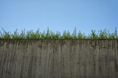 concrass (LG_92) Tags: porto portugal portuguese architecture contemporary modern 2018 nikon dslr d3100 concrete lines green blue grey abstract minimalist grass