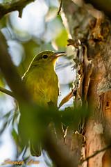 D850-1224 (yowstanley) Tags: nikon bird 200500mm nature d850 wild green garden