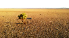 Lonely Shrub (Glenn3095) Tags: inverloch natural scenery