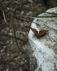 Macro of a Butterfly (tiago.afons) Tags: zoo butterfly