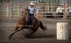 Nicola Valley Rodeo 2018 (Elaine Taschuk) Tags: nicola valley rodeo cowboy horse bull bronco wrestling equine merritt cowgirl bareback steer saddle bronc tiedown roping ladies barrel racing team riding rider cpra pro jockey people livestock tree
