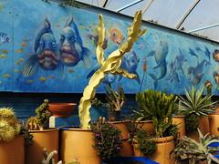 Cactus Country, Strathmerton 1406 (Lesley A Butler) Tags: victoria strathmerton cactuscountry cacti australia