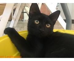 Akane, nacido el 26 de Mayo de 2018 (Leales.org • tu guía animable) Tags: adopta adoptar adoptanocompres noalmaltratoanimal adopción sebusca extraviado perdido perro gatos lealesorg