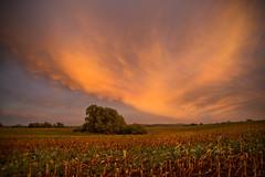 Abendlicht 2 (herberthowe) Tags: himmel abend abendstimmung abendlicht felder sonnenuntergang farbenspiel