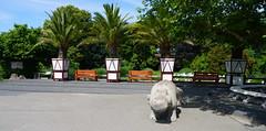 Blijdorp Zoo (11) (bertknot) Tags: blijdorp blijdorprotterdam blijdorpzoo dutchzoo dierentuin blijdorpdierentuin