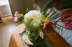 untitled (amanda aura) Tags: film helsinki finland olympusom1 home interior flowers