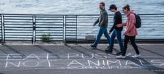 2018 - Germany - Düsseldorf - Rhine River Waterfront (Ted's photos - For Me & You) Tags: 2018 cropped düsseldorf germany nikon nikond750 nikonfx tedmcgrath tedsphotos vignetting denim denimjeans people peopleandpaths pathsandpeople railing shadows sign ballcap backpack