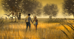 Fields of Gold (larisalyn (Rachel)) Tags: field secondlife sunset sunrise landscape barley romance love gold hands couples trees