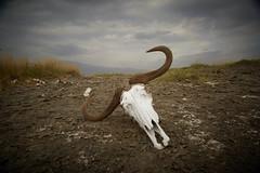 quand t'es dans le désert depuis trop longtemps (latourinfernal) Tags: canon5dmark3 désert aventure fin flickrtravelaward