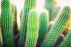I Saw Beyond the Blur (Thomas Hawk) Tags: america arizona desertbotanicalgarden papagopark usa unitedstates unitedstatesofamerica cacti cactus desert phoenix us fav10 fav25 fav50