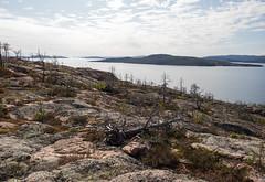 Un incendie en 2008 (sosivov) Tags: sweden balesudden highcoast högakusten mountain bothniansea sea trees view