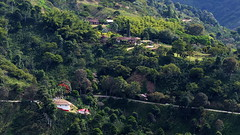 Rural scene near Santuario, Risaralda, Colombia P1240280 (Andrew Neild, UK) Tags: risaralda colombia santuario rural scene finca farm