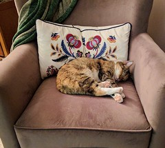 Kiwi Sleeping in a Chair (Stabbur's Master) Tags: cats kitty kitten kitties sleepingcat