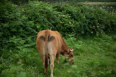 Cow Butt (trsl1234) Tags: cow animal farm kuh