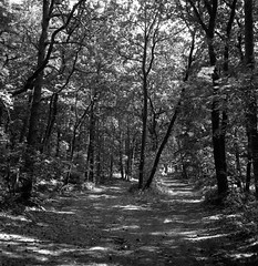 The old forest (Rosenthal Photography) Tags: ilfordfp4 ff120 asa125 ostepfad mittelformat 6x6 schwarzweiss 20180715 rolleiflex35f ilfordlc2912920°c12min analog nordpfade landscape forest trees shire mood july summer path pathway track trail rollei rolleiflex f35 35f sk schneiderkreuznach 75mm ilford sfx sfx200 redfilter filter lc29 129 epson v800 old
