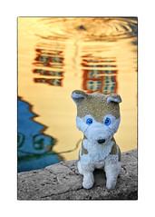 MEIN Jungbrunnen (WolfiWolf-presents-WolfiWolf) Tags: wolfiwolf wolfi wolf wolfismus werwolfi eneamaemü eyes blue augen armani butlers conductor creator chef composition dirigent enea farky fuddlers fresko glück hungary ibindaslicht intensiv ichträumegernvonkleinenwolfis jazzinbaggies kleinewolfis lupus multiversen multiverses music master meinemajestät naturwunder öhrchen ohrwascherl portrait quanten quantensuppe quantenuniversum rente stüben treue universe universum vollmond wasser water explorant lyric zügellos reflection aub concert fountain brunnen wolfiistinbrunnengfallen mauerwolfi arsmusica