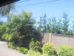 IMG_8282 (Andy E. Nystrom) Tags: bellevue washington wa bellevuewashington