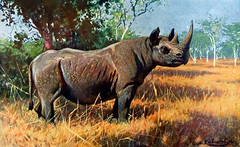 THE RHINO PROJECT - Southern White Rhinoceros in grassland THREATENED, original lithographic print Artist Wilhelm Kuhnert, from the Illustrated Natural History 1901 by Rev. J. G. Wood 1827-1889 originating from BREHMS TIERLEBEN 1893 (skaradogan) Tags: the rhino project southern white rhinoceros critically endangered original antique master engraving wood block print from illustrated natural history by rev j g kroonegallery henry wolf 1901 grassland tierleben brehms threatened friedrich wilhelm kuhnert