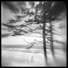 Oregon Coast #7 (LowerDarnley) Tags: agfaisoly modifiedcamera transplantedlens holgalens flippedlens oregon oregoncoast yachats capeperpetua trees ocean pacificocean coast northwest