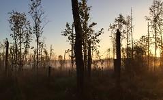 Morning mood (is.hollmann) Tags: dust morgennebel moor swamp belarus