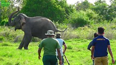 Humanity! Helping an injured Elephant (THE WILD ELEPHANT) Tags: huge elephant rescue video youtube quite baby funny kids videos the wild wildlife news tv