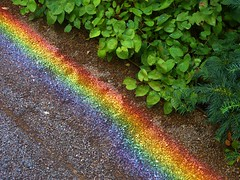 "A Real ""Ground-Bow"" (Dan Daniels) Tags: rainbow fondationbeyeler riehenbsch switzerland optics refraction pathways panasonic audand gravel plants"