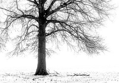 Tree in Snowy Field (Wits End Photography) Tags: fog monochrome weather minimal winter tree season snow bw bare black blackwhite blackandwhite cold damp drizzle foggy freeze frost gray grey haze haziness icy minimalism mist rain simple uncluttered white
