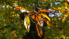 DSC_4474 (Miguelo.) Tags: 2013 andalucia aracena digital españa huelva nikon provinciadehuelva plantas naturaleza paisaje