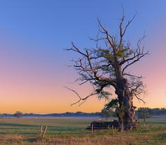 The Bare Oak Tree (Alona Azaria) Tags: saintléopardindaugy france landscape nikon d800 nikkor 1424mm f28