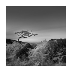 Outstretched (Nick green2012) Tags: dartmoor minimal square infrared silence