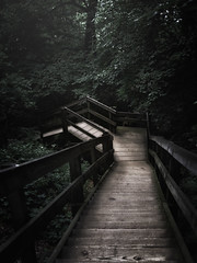 Stairs (patkelley3) Tags: stairs forest trees leaves