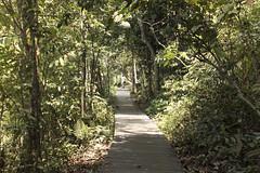 MacRitchie Boardwalk (fantommst) Tags: lisaridings fantommst macritchie reservoir singapore boardwalk reserve park bush nature trail national central catchment forest