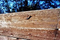 Faccio ombra (michele.palombi) Tags: ombra chiodo perforazione ruggine buco crepa film 35mm kodak portra160 colortec c41 negativo colore