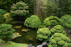 Garden Greens and Shapes (armct) Tags: garden japanese tea goldengatepark sanfrancisco california usa pond rocks shapes green refection reflection growth shrubs bamboo trees display lily