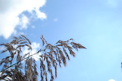 Inspiration (degreve.sarah) Tags: sky flower nature cloud poetic tree