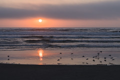 Sunset at Heceta Beach (Tom Trent) Tags: florence oregon unitedstates us beach sunset hecetabeach lanecounty