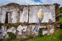 Street art in Flores - Azores Island [EXPLORED - 11/09/2018] (Luca Quadrio) Tags: pattern color art street textured brick azores graffiti texture wallpaper island portugal culture paint summer atlantic urban tourism travel dirty bird decoration design flores wall europe colorful grunge