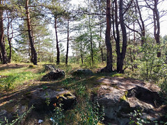 Forest (TryVision) Tags: woods forest autumn tree trunk lush foliage area footpath cannock chase scenery wenatchee national copse popular tags rocks landscape htc 10 mobilephotographt korostyshiv ukraine