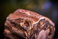 Petrified Wood (Of Light & Lenses) Tags: zeiss2860mmsplanarmakro macromonday rock petrifiedwood petrification geology minerals volcanic vintage lens earth mineral versteinerung