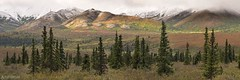 Colored hills with snow topping - Alaska (Captures.ch) Tags: aufnahme herbst wolken schnee snow clouds tag morgen morning day foliage fall alaska denali denalinationalpark wald valley tal tree sky landschaft landscape hügel himmel hill gras forest berge mountains capture nationalpark