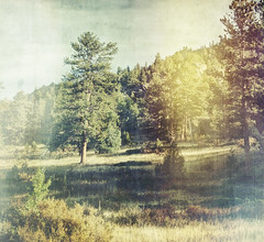 we could camp here (jssteak) Tags: canon colorado hdr forest trees lightleak aged vintage morning