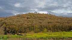 DSC00173 (Poria) Tags: nature view landscape jungle forest mountain sky cloud cloudy storm hill hiltop tree green travel iran