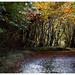 Autumnal Way / Herbstlicher Weg