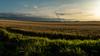 Countryside - Sunset - Pardinho/SP - 2 (Enio Godoy - www.picturecumlux.com.br) Tags: rokinon2812mm 16x9 pardinhosp sonyalpha viveza2 sunset countryside sky sony sony03 bluesky sonyalpha6300 niksoftware nature natural