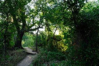 Trail By The Trinity River