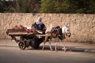 Onion seller, Cairo, Egypt