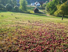 Red meadow! (:Linda:) Tags: germany thuringia village bürden meadow apple barn tree