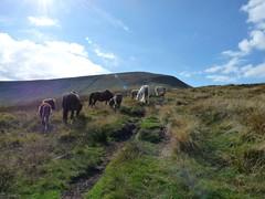 The Brecon Beacons  Wales UK. (James Holme) Tags: horse horses breconbeaconsnationalpark breconbeacons wales southwales uk unitedkingdom fz28 dmcfz28